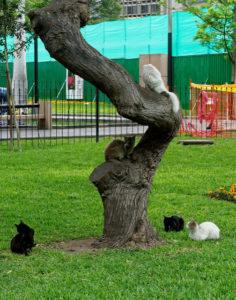 Gatos en parque kennedy en lima