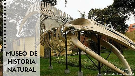 Museo de historia natural portada