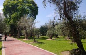 Camineria del Parque El Olivar en Lima