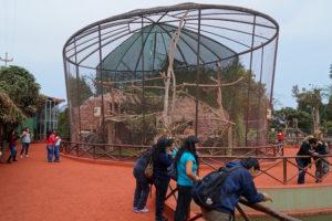 Interior del parque de las leyendas Lima